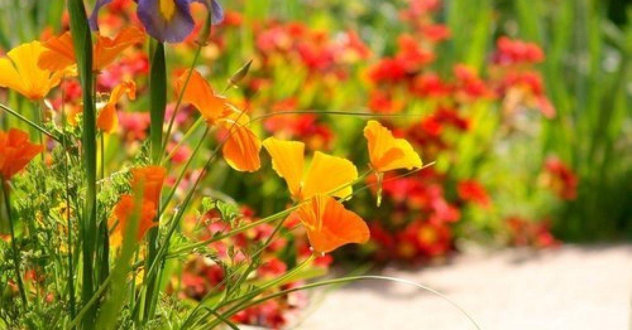 spring-garden-1375197.jpg